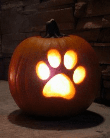 15 adorable pumpkin carving ideas rachel s crafted life 15 adorable pumpkin carving ideas